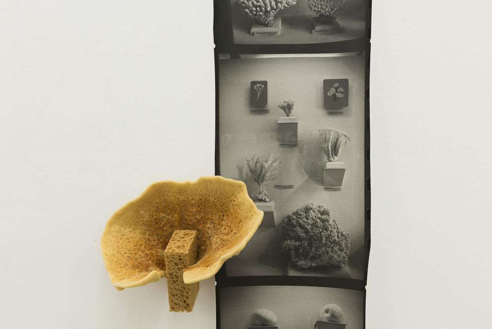 Petra Feriancová, Fungi, 2017  (detail)