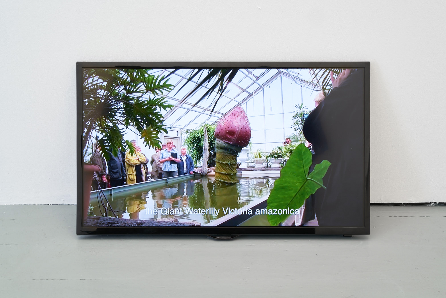 Ingela Ihrman, The Giant Water Lily Victoria amazonica BLOOMS, 2012, Documentation of a 2-night performance with waterlily costume, female host, pineapple fragrance, photo: Original&theCopy