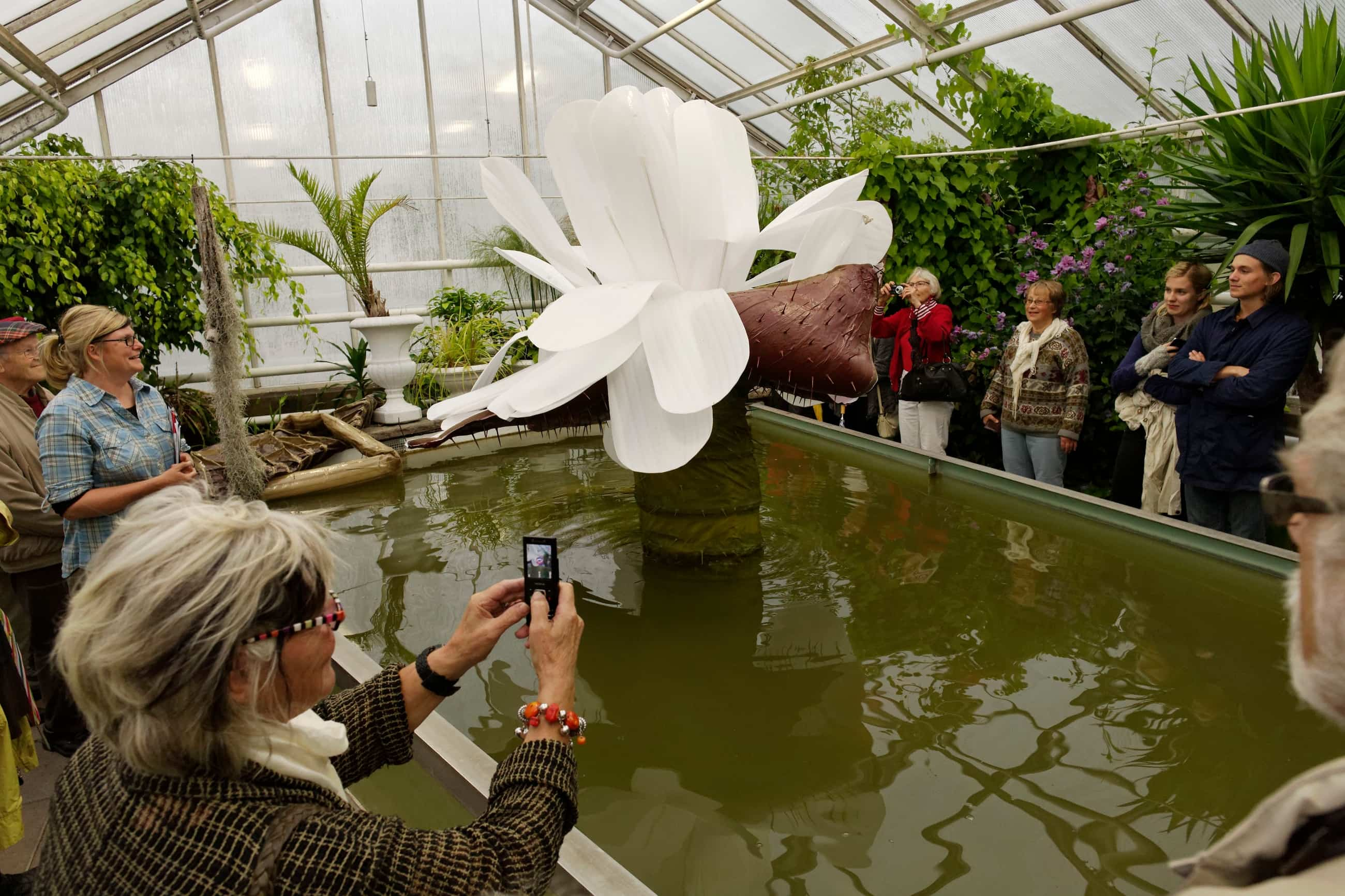 ngela Ihrman, The Giant Water Lily Victoria amazonica BLOOMS, 2012, Documentation of a 2-night performance with waterlily costume, female host, pineapple fragrance