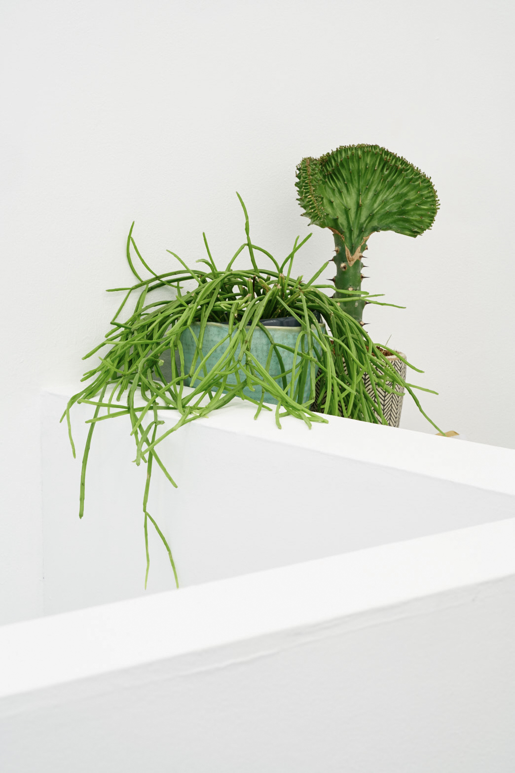 Tenderpixel house plants, photo: Original&theCopy