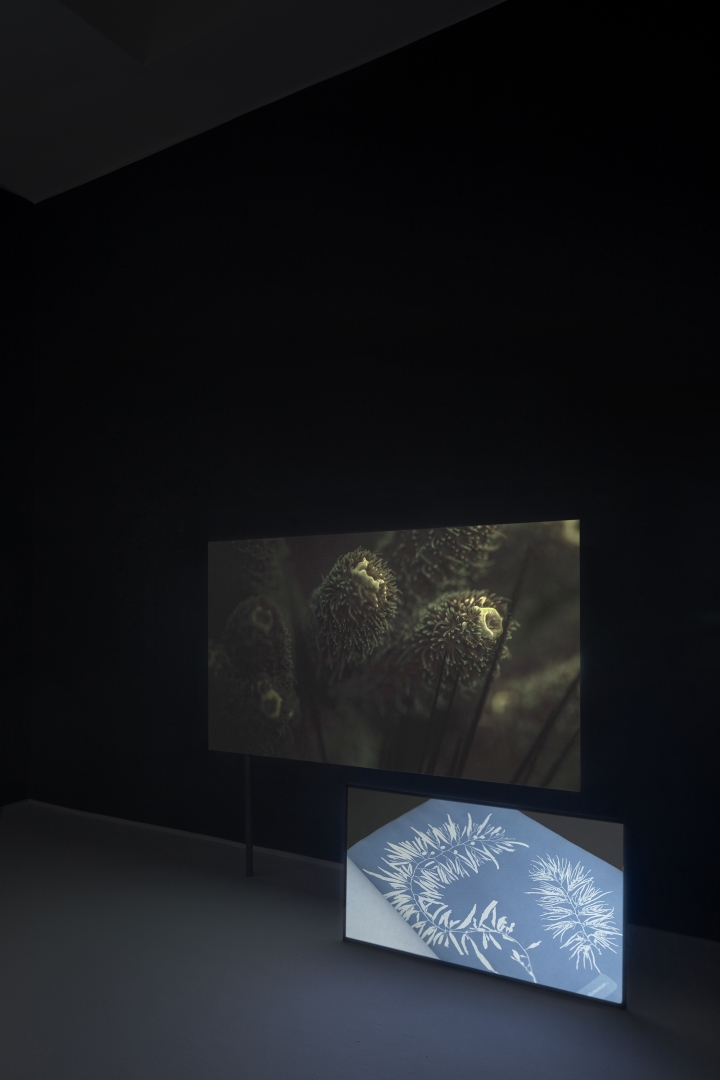 Sonia Levy, For the Love of Corals, Curated by Borbala Soos, Karlin Studios